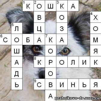 домашние животные в загадках